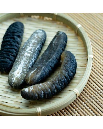 HAI-O Sea Cucumber (M)
